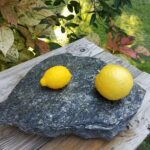 Lemons and Rosemary Shortbread, who would have thought?